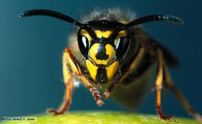 Wasp treatment from £45
